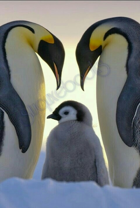 Amazing Penquins
